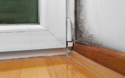 4 Signs That You Have a Home Mold Problem